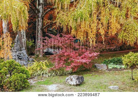 The most beautiful place in the Arboretum's Japanese garden. This place attracts a variety of color combinations. Artificial pond and standing next to a gazebo complements the color vibe!