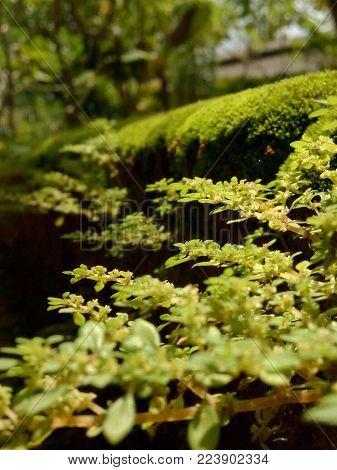 blur focus green moss background. blurred green moss background.