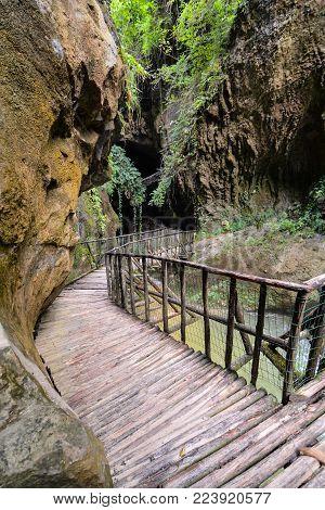 Photo Picture of Deep Forest Pathway Wooden Footbridge