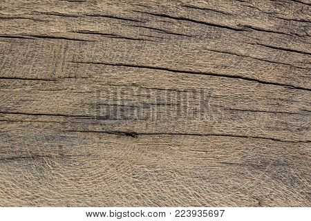 A texture of wood, also suitable as a background