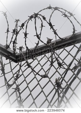 Barbed wire security fence. Rolled barbwire on top of chain link fence, with steel support frame. White vignette.