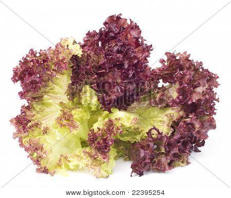 Red lettuce Leaves