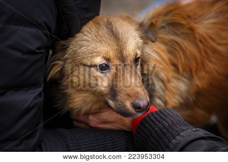 A female veterinarian helps a stray dog. Help for homeless animals. Unfortunate animals need help.