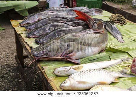 Freshly caught catfish on banana leaf in a fish market, Luang Prabang, Laos