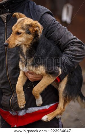a redheaded homeless dog with people who help him. Volunteer Vetrenars help homeless dogs. Problems of homeless animals. Unhappy dogs.