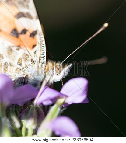 butterfly in nature. In the park in nature