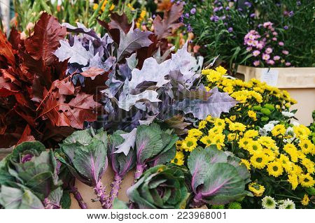 Sale of flowers called Decorative cabbage in the foreground. Other different flowers are next to the background