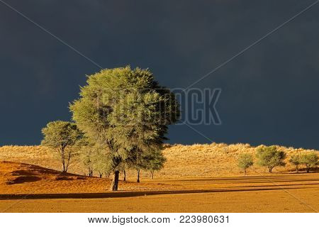 Desert landscape against a dark sky of an approaching storm, Kalahari desert, South Africa