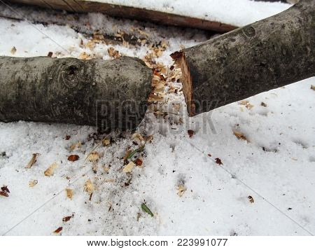 A thin tree sawn to two parts lies on the snow at the top of the photo. Winter concept template - snow, firewood, sawdust close-up