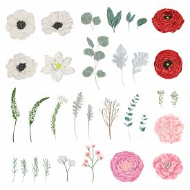 Collection of flowers, leaves and branches. Vintage floral elements. Isolated objects. Vector illustration in watercolor style