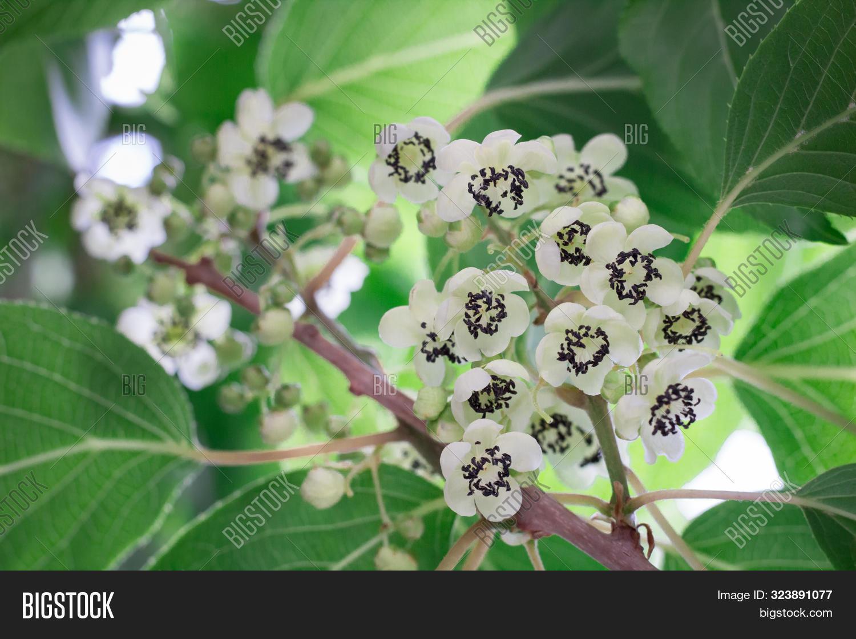 Close Flowering Tree Image Photo Free Trial Bigstock