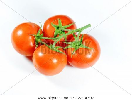 Four tomatoes on branch