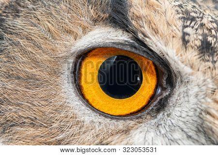 Eagle Owl Eye Close-up, Eye Of The Eurasian Eagle Owl, Bubo Bubo.