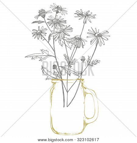 Tansy And Chamomile. Bouquet Of Hand Drawn Flowers And Herbs. Botanical Plant Illustration. Vintage