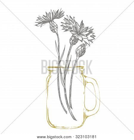Blue Cornflower Herb Or Bachelor Button Flower Bouquet Isolated On White Background. Set Of Drawing