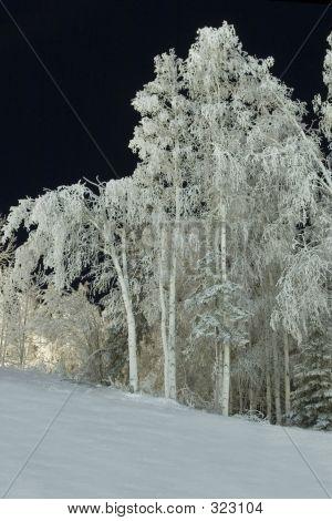 Frozen: Trees