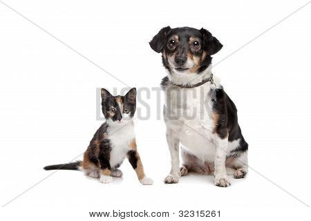 Kitten And Jack Russel Terrier