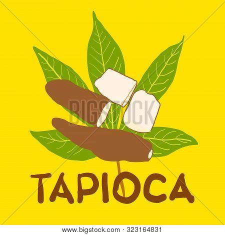 Vector Illustration Of Tapioca Fruit On Green Tapiocas Leaf And Hand Drawn Text Tapioca On Yellow Ba