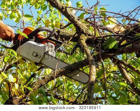 Chainsaw In Hand Among The Branches Of Apricot Tree With Green-yellow Leaves Against A Blue Sky. Cha
