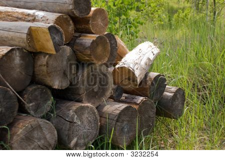 Logs On Grass