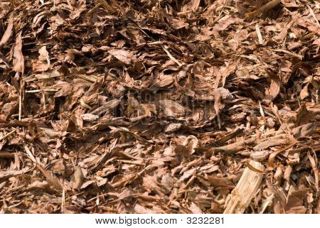 Brown Bark