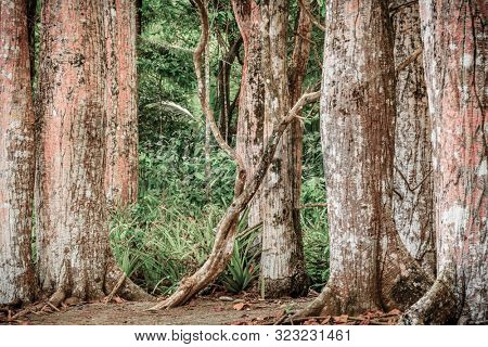 Image of tree trunks in Corcovado National Park in Costa Rica