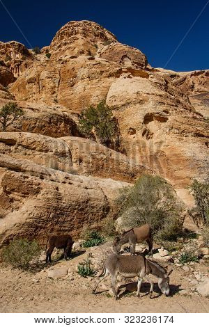 Donkey In Rocky Dessert In Jordanian Ancient City Of Petra From Nabataean Time