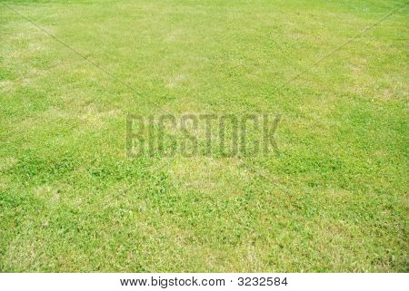 Real Lawn