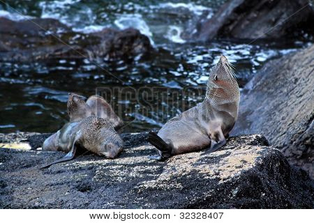 Seals In The Milford Sound