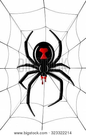 Spider Black Widow Vector Photo Free Trial Bigstock