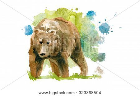 Cute Brown Wild Bear. Watercolor Sketch Drawing.