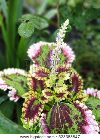 Natureza Flores Belas Naturais Com Tons Suaves