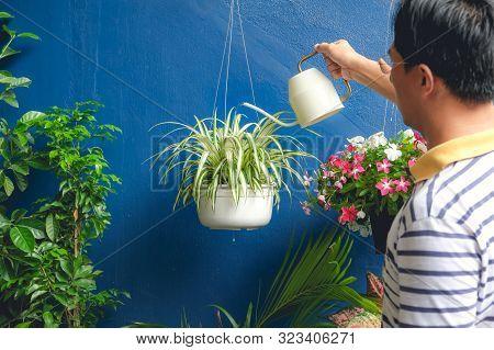 Asian Man Watering Plant At Home, Businessman Taking Care Of Chlorophytum Comosum ( Spider Plant ) I