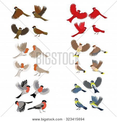 Collection Of Birds Robin, Red Cardinal, Tits, Sparrow, Bullfinches, Waxwing Isolated On White Backg