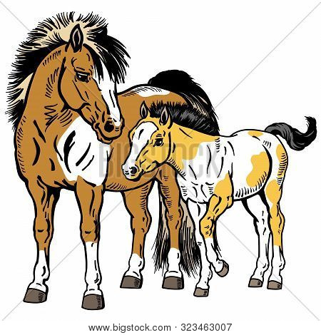 Shetland Pony Horses. Miniature Spotted Mare With Little Foal. Isolated Vector Illustration