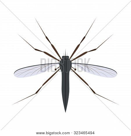 Cartoon Color Fly Mosquito Insect Symbol Of Malaria, Epidemic And Pest. Vector Illustration Of Blood