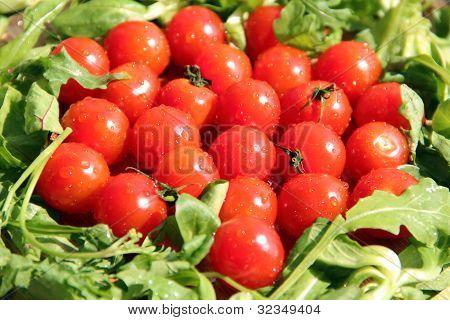 Fresh Cherry Tomatoes and Herbs