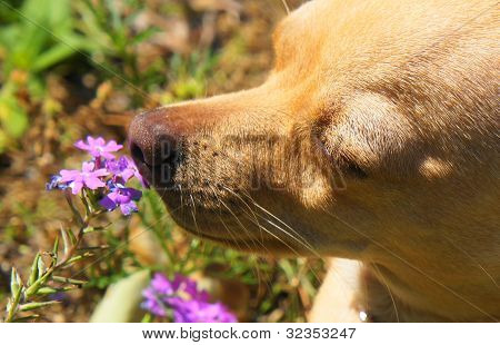 Bella smelling the flowers