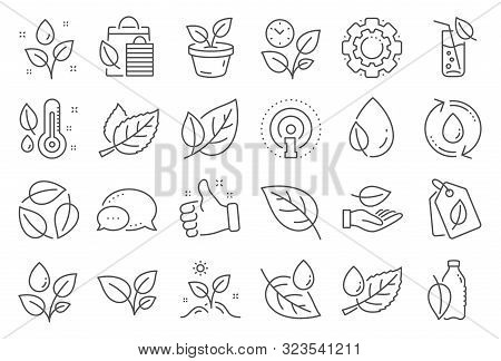 Plants Line Icons. Mint Leaf, Growing Plants And Humidity Thermometer Icons. Bottle With Mint Water,