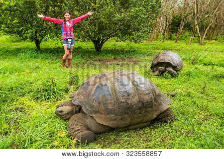 Galapagos Giant Tortoise and happy woman tourist on Santa Cruz Island in Galapagos Islands. Animals, nature and wildlife photo close up of tortoise in the highlands of Galapagos Ecuador, South America