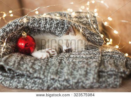 Kitten sleep in christmas hat. Little cat sleep on sofa near christmas light