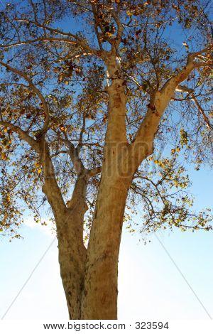 Autumn Tree Close Up