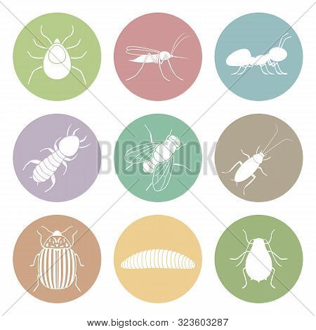 Insect Symbols On White Background. Icon Set. Vector.