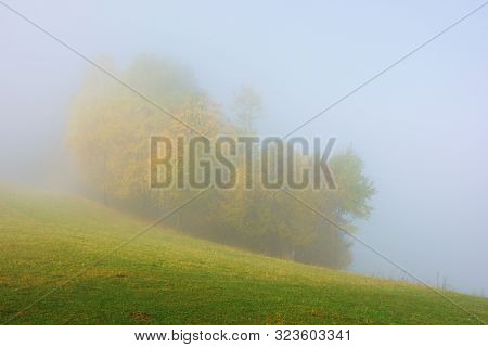 Trees In Colorful Foliage On The Meadow In Fog. Beautiful Autumn Scenery In The Morning. Wonderful N
