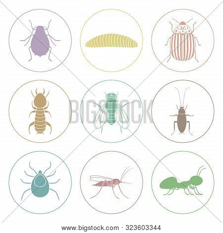 Set Of Colorful Insect Icons. Pest Symbols. Vector.