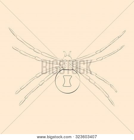 Black Widow Illustration. Hand Drawn Isolated Sketch. Vector.