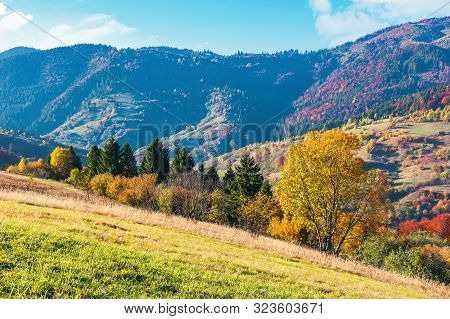 Wonderful Sunny Autumn Day In Mountains. Great Views Of Carpathian Rural Landscape. Trees In Colorfu