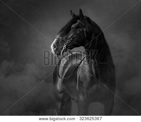 Black-and-White portrait of black Andalusian Horse in traditional bridle in light smoke.