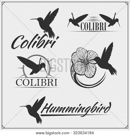 Colibri1.eps