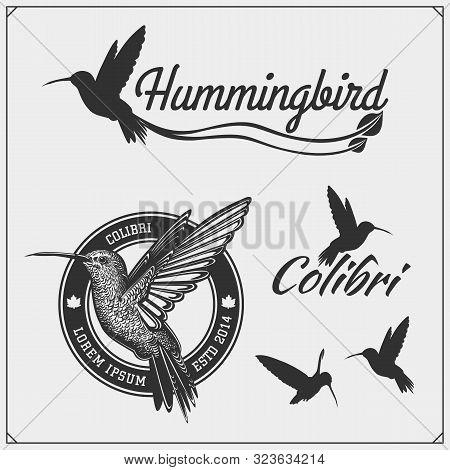 Colibri2.eps